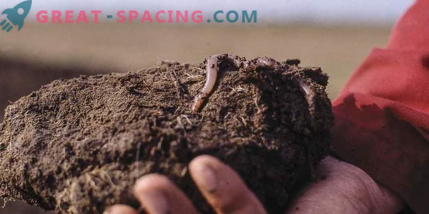 Find out what worms dream about?